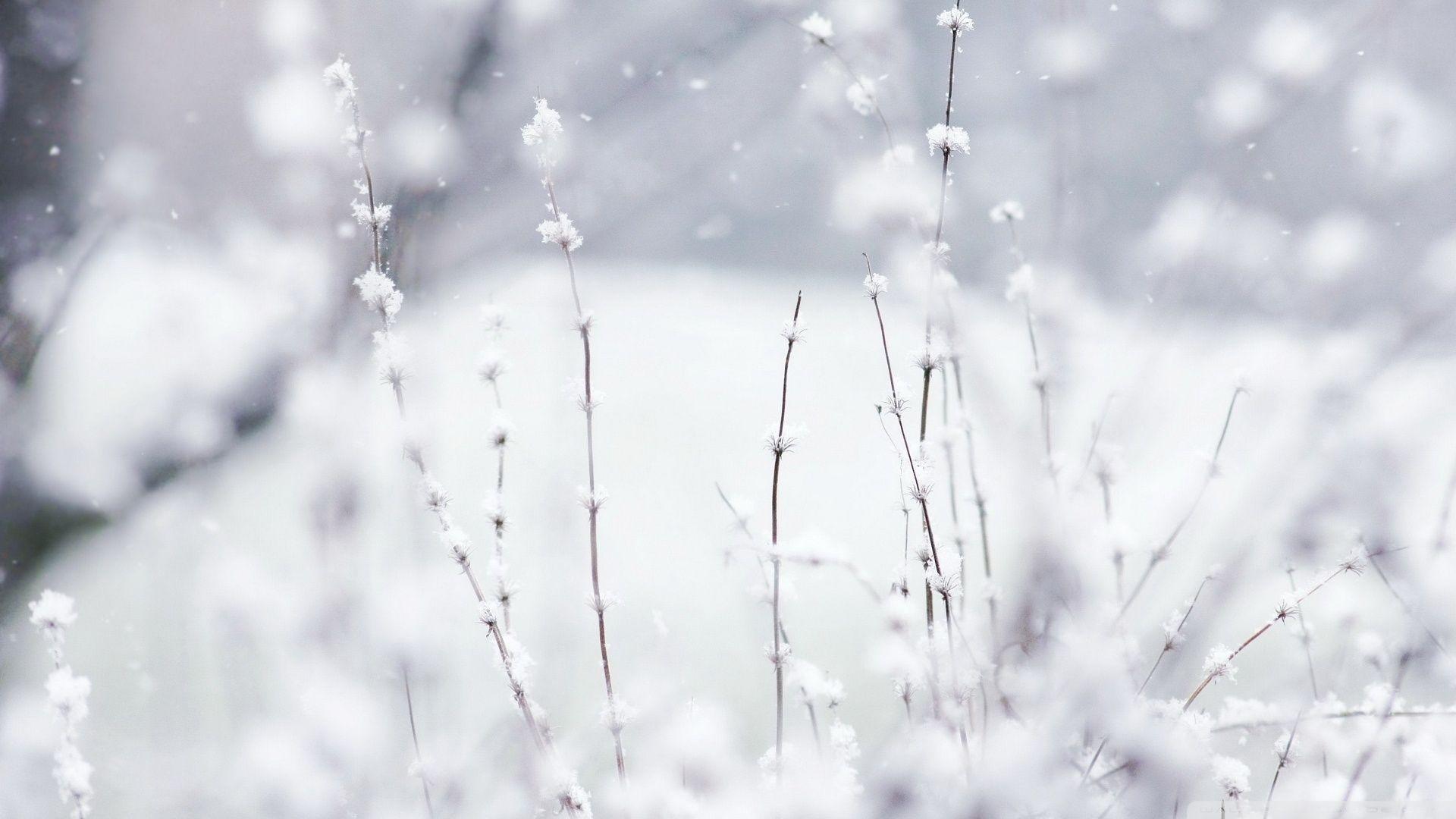 Epingle Par Le Paih Emeline Sur Winter Neige Paysage Hiver Paysage Enneige