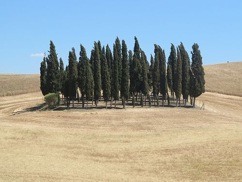 Tuscany, what else ?    ...on the road from Montepulciano to Pienza. Photo credits to Tenuta Valdipiatta
