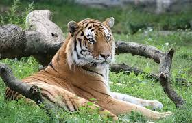 Pin On Exotic Animal List