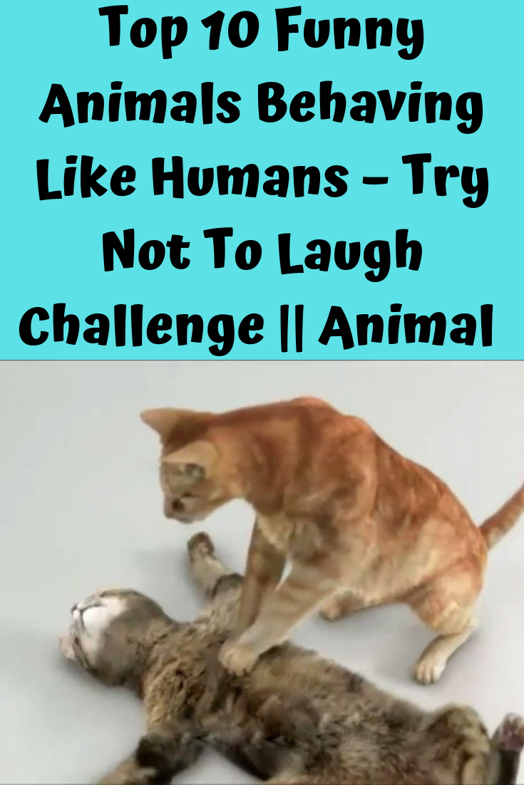 Top 10 Funny Animals Behaving Like Humans Try Not To