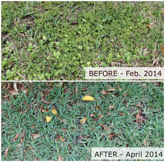 Our Side Yard Battle With Weeds Before After