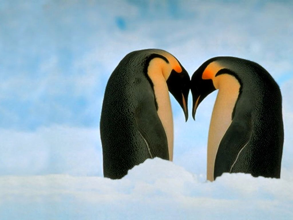 Snuggling and penguins again   Animals kissing