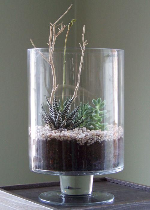 Cuatro ideas para decorar tu casa con plantas pinterest for Ver ideas para decorar una casa
