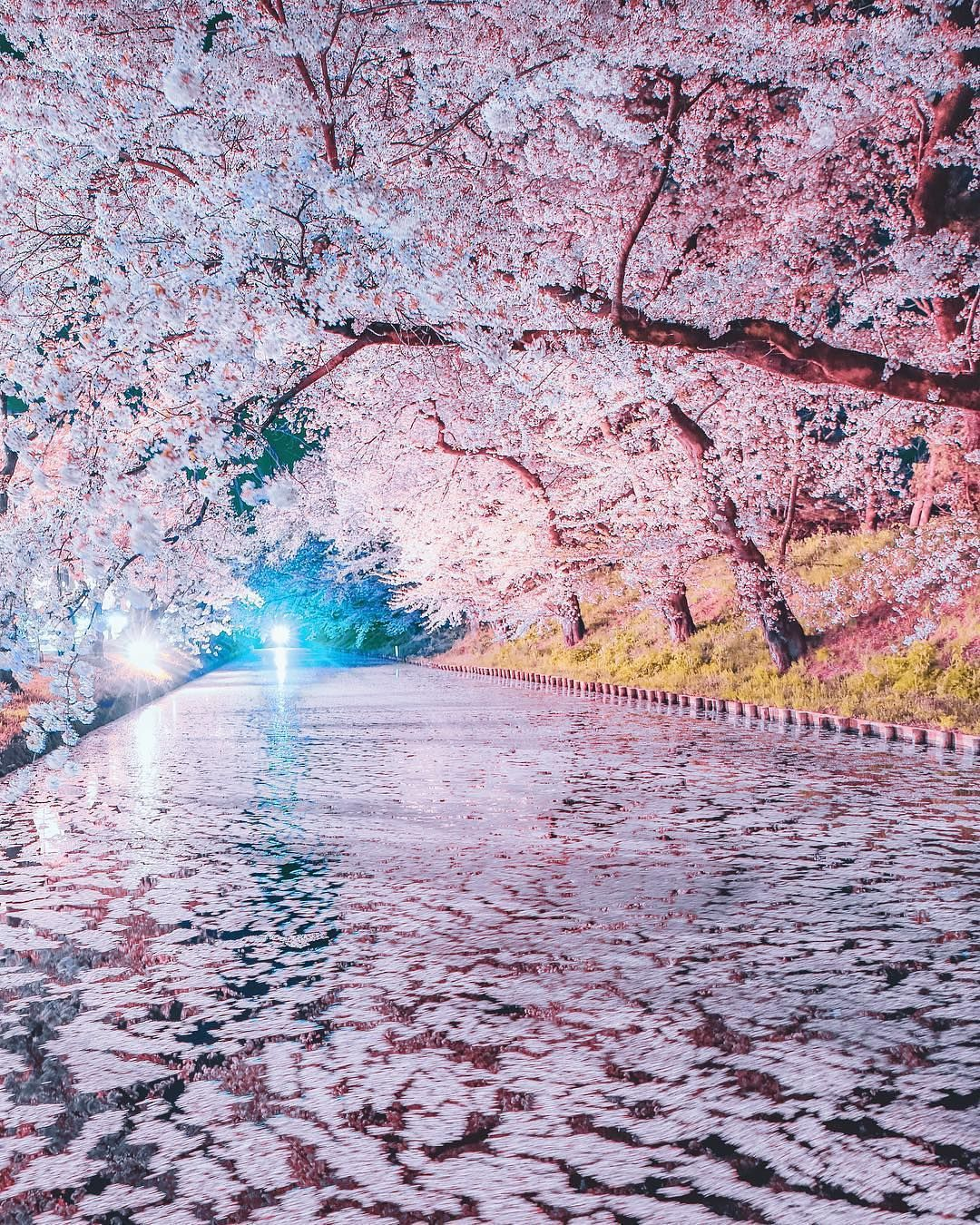 Sakura Season In Japan Is Something To Witness In Person Image By Youkixxx Curatio Beautiful Landscapes Beautiful Nature Wallpaper Beautiful Nature