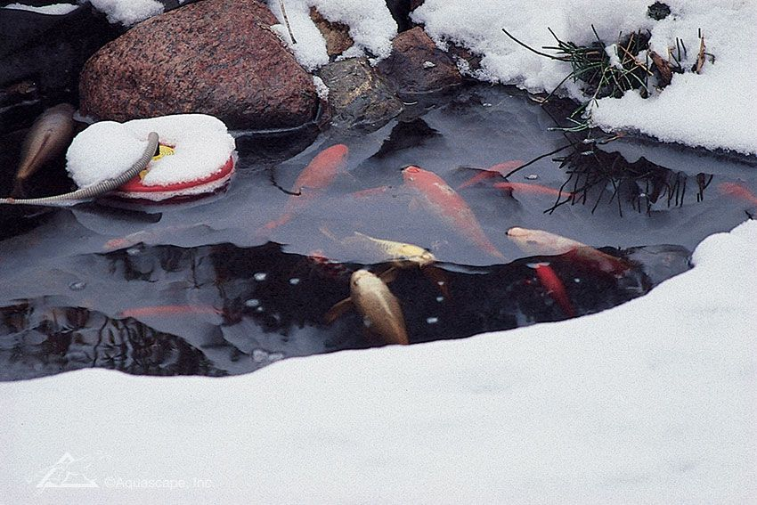 How To Maintain A Running Winter Pond Aquascape Inc Ponds Backyard Fish Pond Gardens Pond Water Features