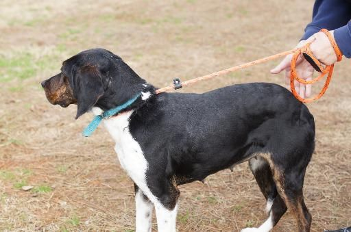 Cheryl Hound Young Female Humane Society Of Saline County
