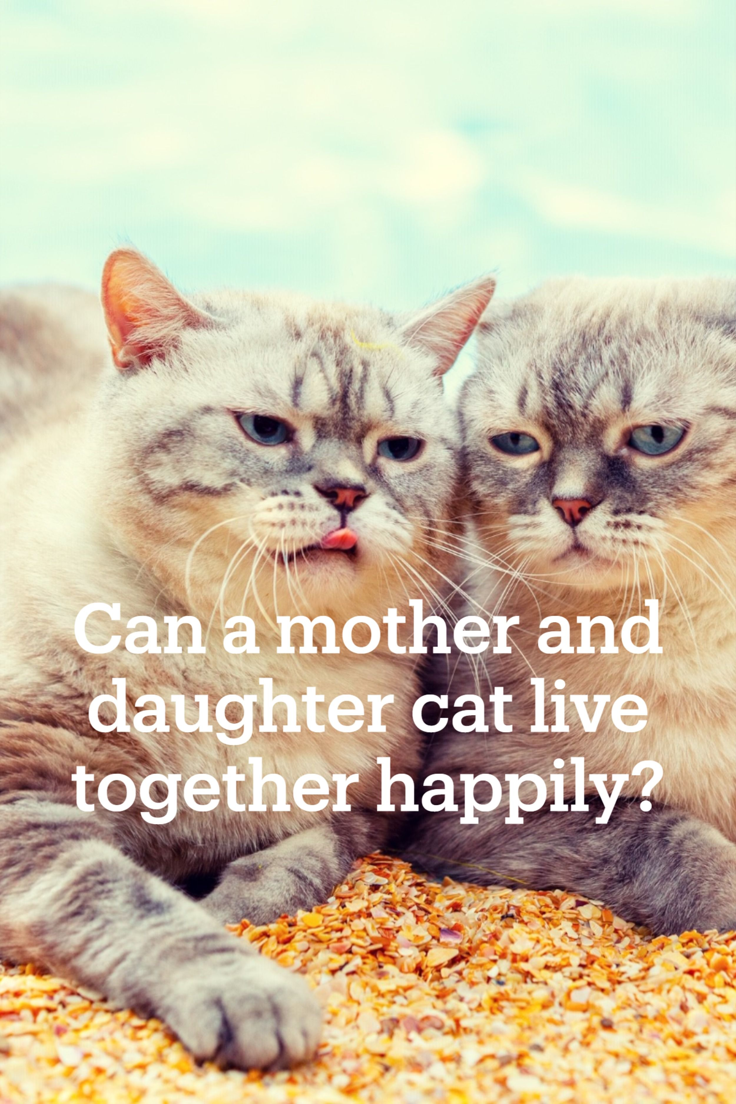 Can A Mother And Daughter Cat Live Together Happily In 2020 Cat Lovers Happily Daughter