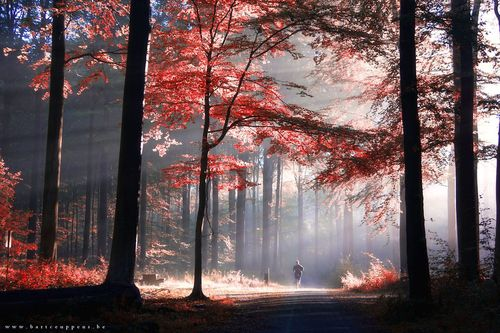 #autumn #forest #trees #morning #sun #light #rays #jogging #people #nature Autumn is just around the corner 6 by Bart Ceuppens