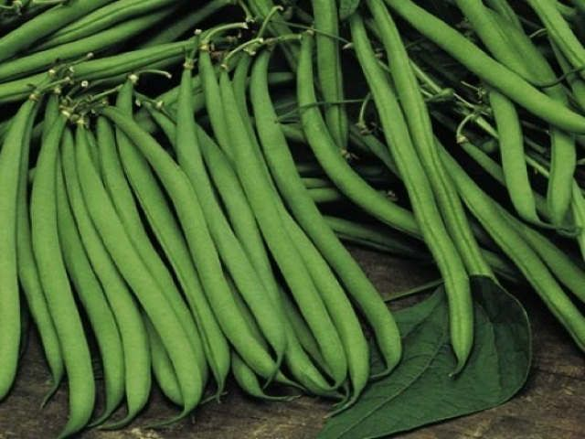 Growing Dwarf French Beans Green Bean Seeds Beans Bean Plant