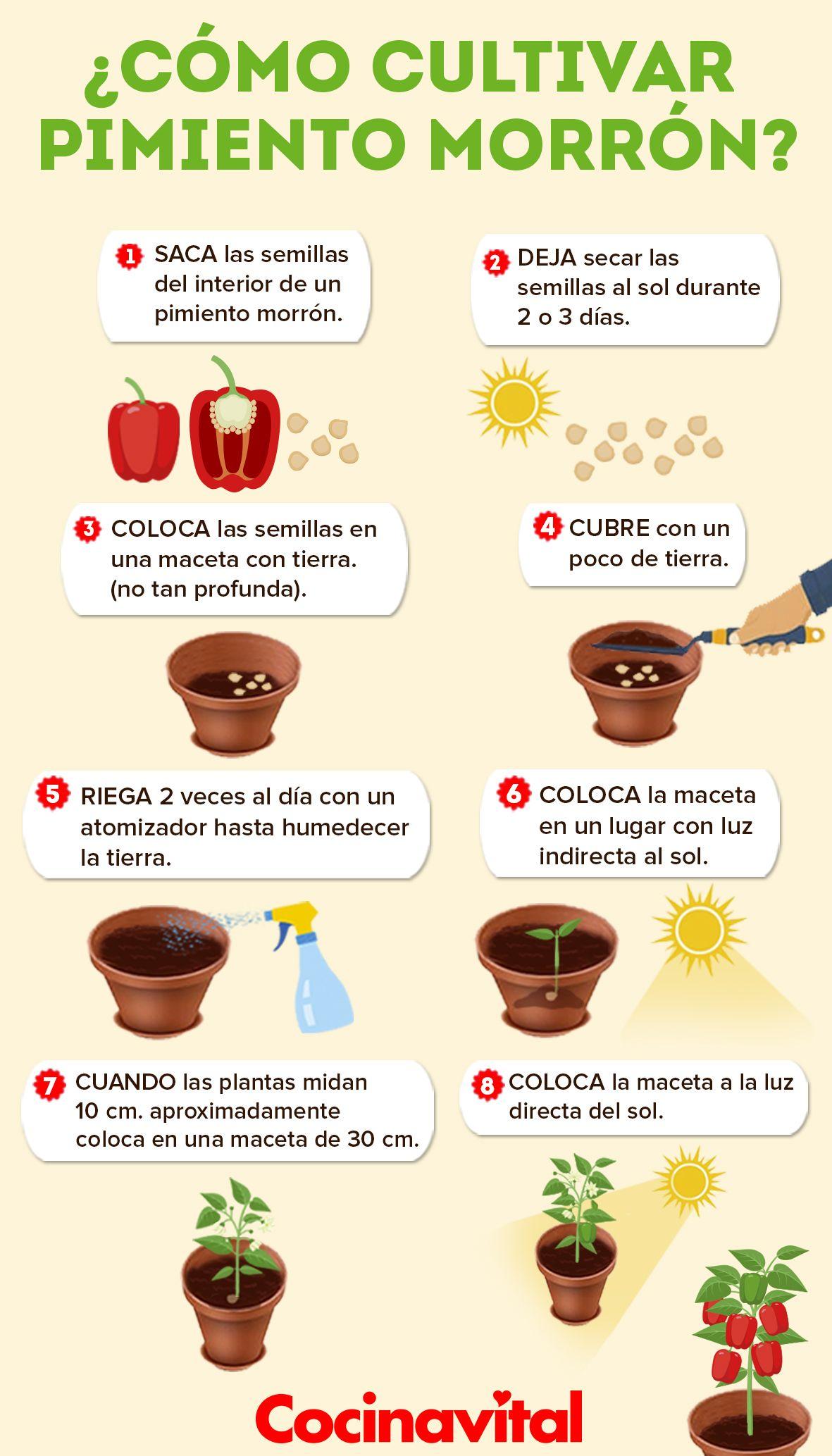Cómo Cultivar Plantas De Pimientos Morrón En Macetas Cocina Vital Qué Cocinar Hoy Cultivo De Plantas Plantar Pimientos Jardín De Productos Comestibles