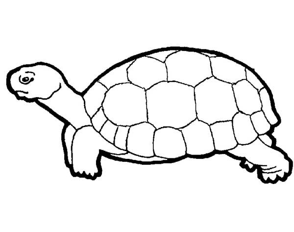 Save This Turtle Coloring Page Coloring Sun Turtle Coloring Pages Spiderman Coloring Coloring Pages