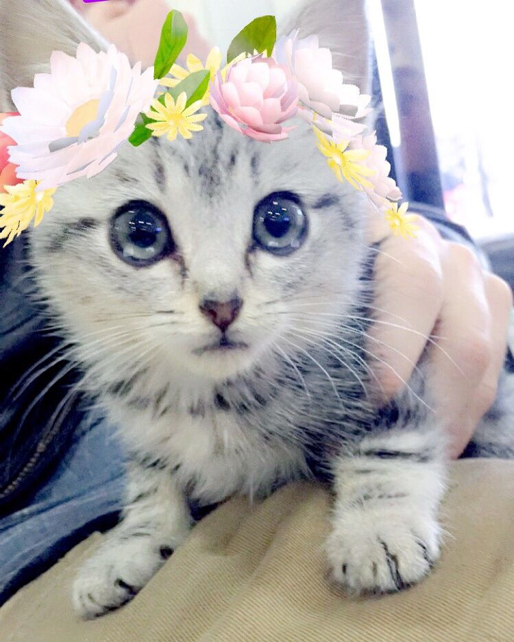 When The Snapchat Filters Work In Your Kitten Cute Cat Cat Pics Cute Animals