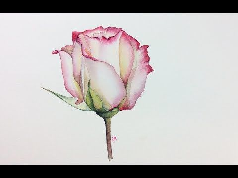 Tulpe Youtube Wasserfarben Malen Tutorial Aquarell Rose Wie