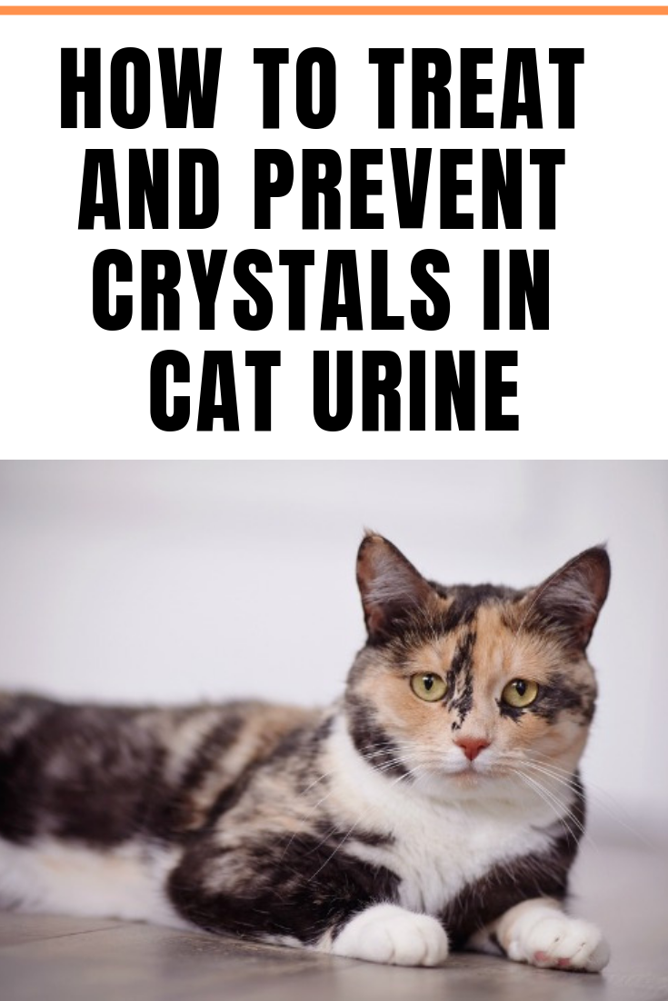 How to Treat and Prevent Crystals in Cat Urine Cat urine