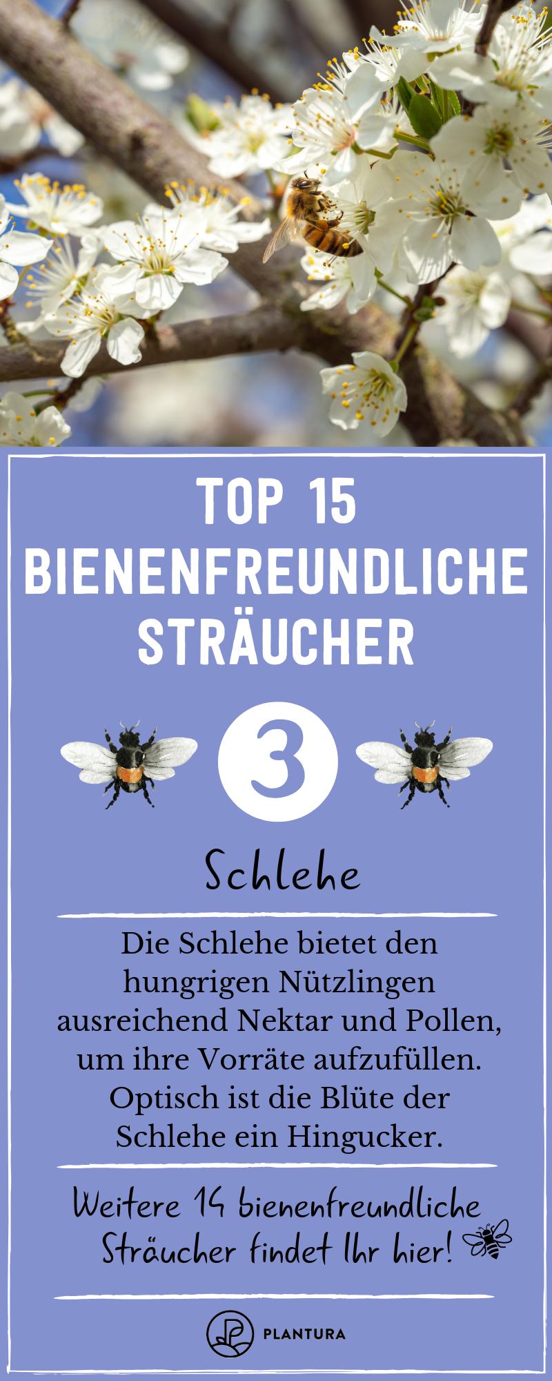 Bienenfreundliche Straucher Top 15 Bienenstraucher Bienenfreundliche Straucher Straucher Garten Bienen