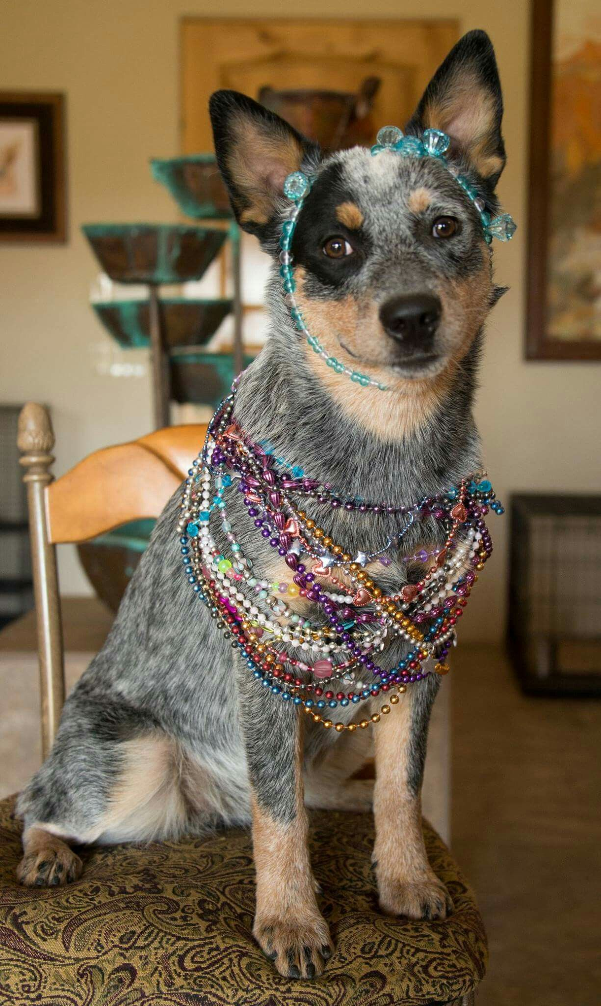 Gracie Is Celebrating Mardi Gras In Style She Is 7 1 2 Months Old