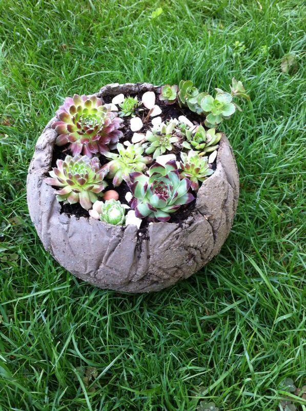 Betonkugel Mit Verschiedenem Hauswurz Pflanzideen Bepflanzung Kakteen Und Sukkulenten