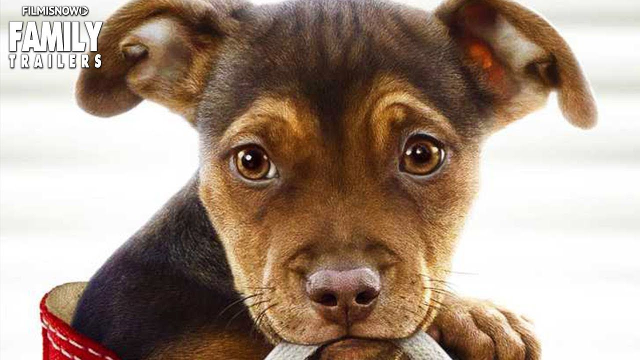 A DOG'S WAY HOME Meet Bella in the first trailer for