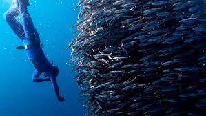 Vida submarina - Pesquisa Google