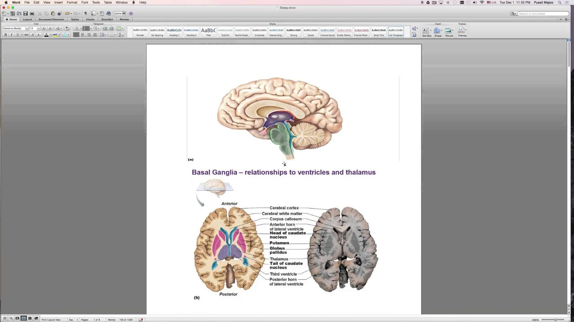 Chapter 12 Central Nervous System Exam Review | BIO.1141 Anatomy and ...