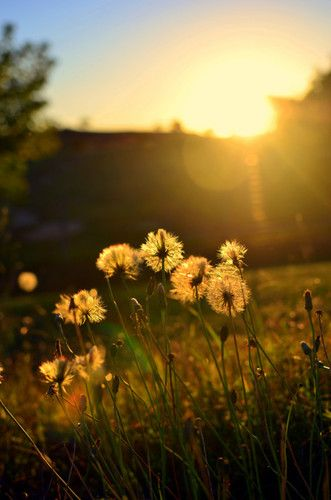 Gallery For > Sunrise Country Field | T R A V E L ...
