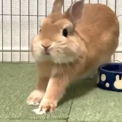 Cute Bunnies <3