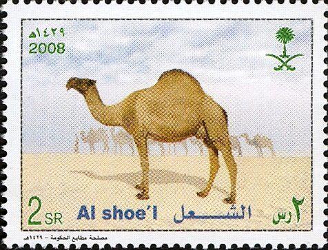 2008: Dromedary (Camelus dromedarius) (ערב הסעודית) (Arab Camels) Mi:SA 1537,WAD:SA004.08