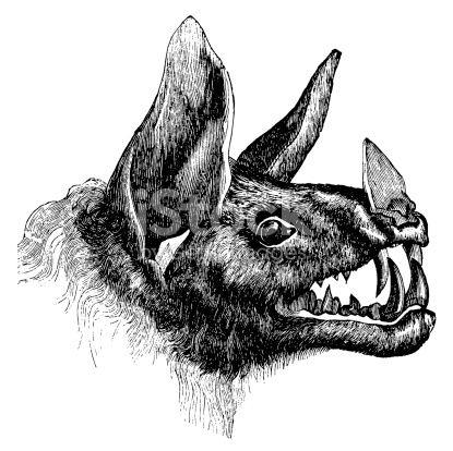 stock-illustration-10305469-vampire-bat-antique-animal-illustrations.jpg (415×414)