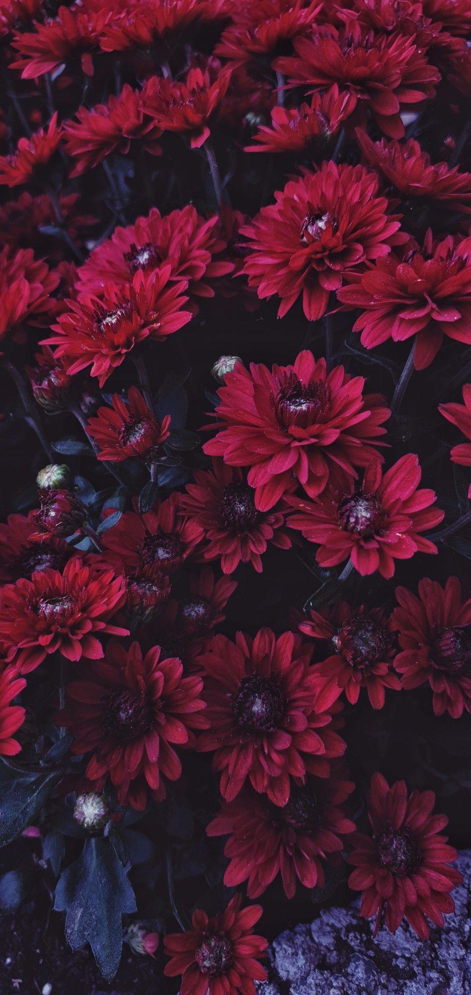 Обои цветок. Природа foto 12
