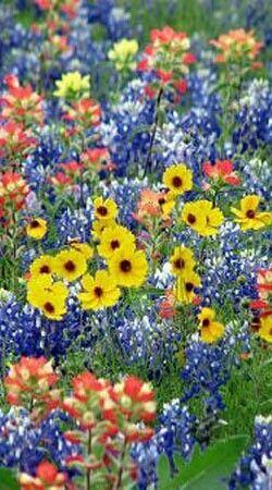 Gotta love these wild flowers!