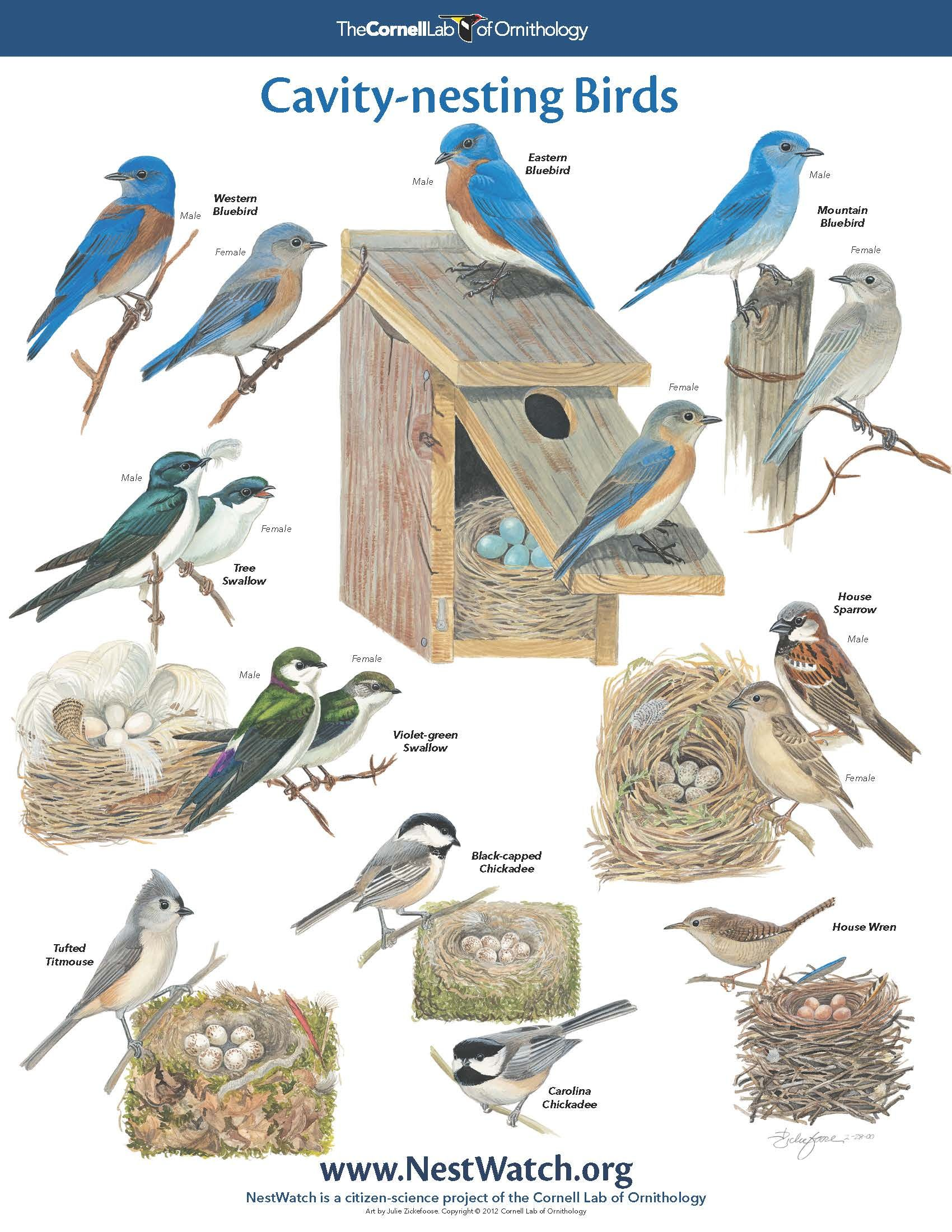 Free nesting birds poster birds pinterest bird free for Types of birdhouses for birds