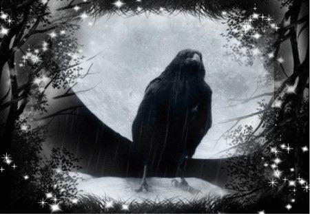 Moon Raven