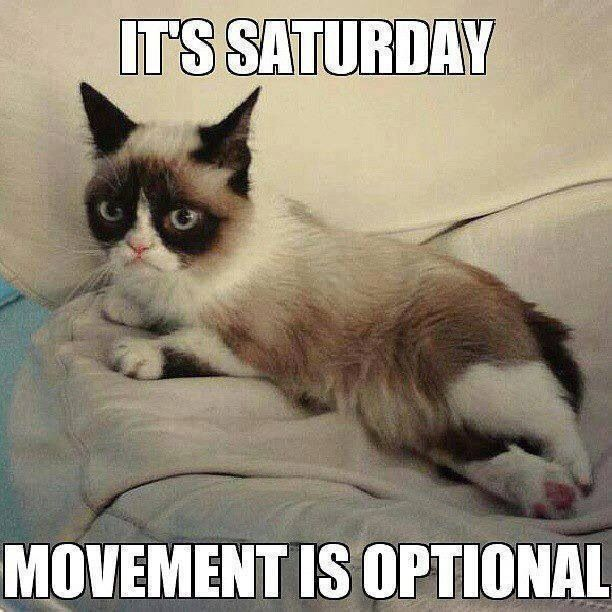 It S Saturday Quotes Quote Days Of The Week Good Morning Saturday Saturday Quotes Saturday Humor Satur Funny Grumpy Cat Memes Grumpy Cat Quotes Funny Cat Memes