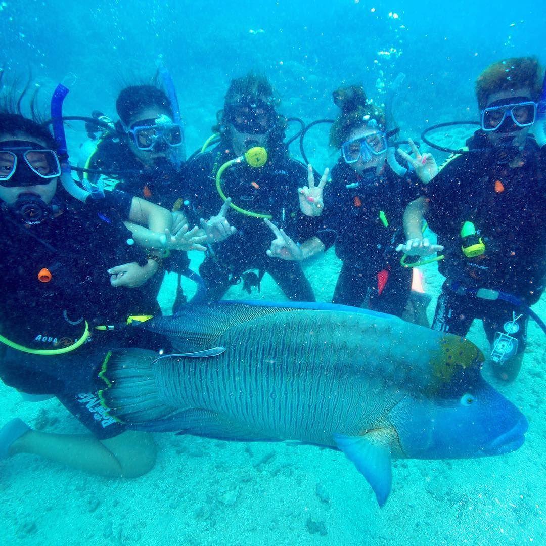 죽기전에 꼭 가봐야한다는  Great Barrier Reef 뽀글뽀글 ㅋㅋㅋ 바다의 퍼피>< 진짜 순하다!!ㅋㅋㅋ . 귀에서 코잡구  킁해도 잘 압이 안빠짐ㅠ . #경험주의자 #수상레져 #여름 #다이빙 #스쿠버다이빙 #내방역 #방배 #평창동 #도곡동 #문정 #방이 #여행 #해외여행 #추억 #호주 #내방역 #케언즈 #액티비티 #바다 #일상스타그램 #그레이트베어리프 #GreatBarrierReef by chloa_____v http://ift.tt/1UokkV2