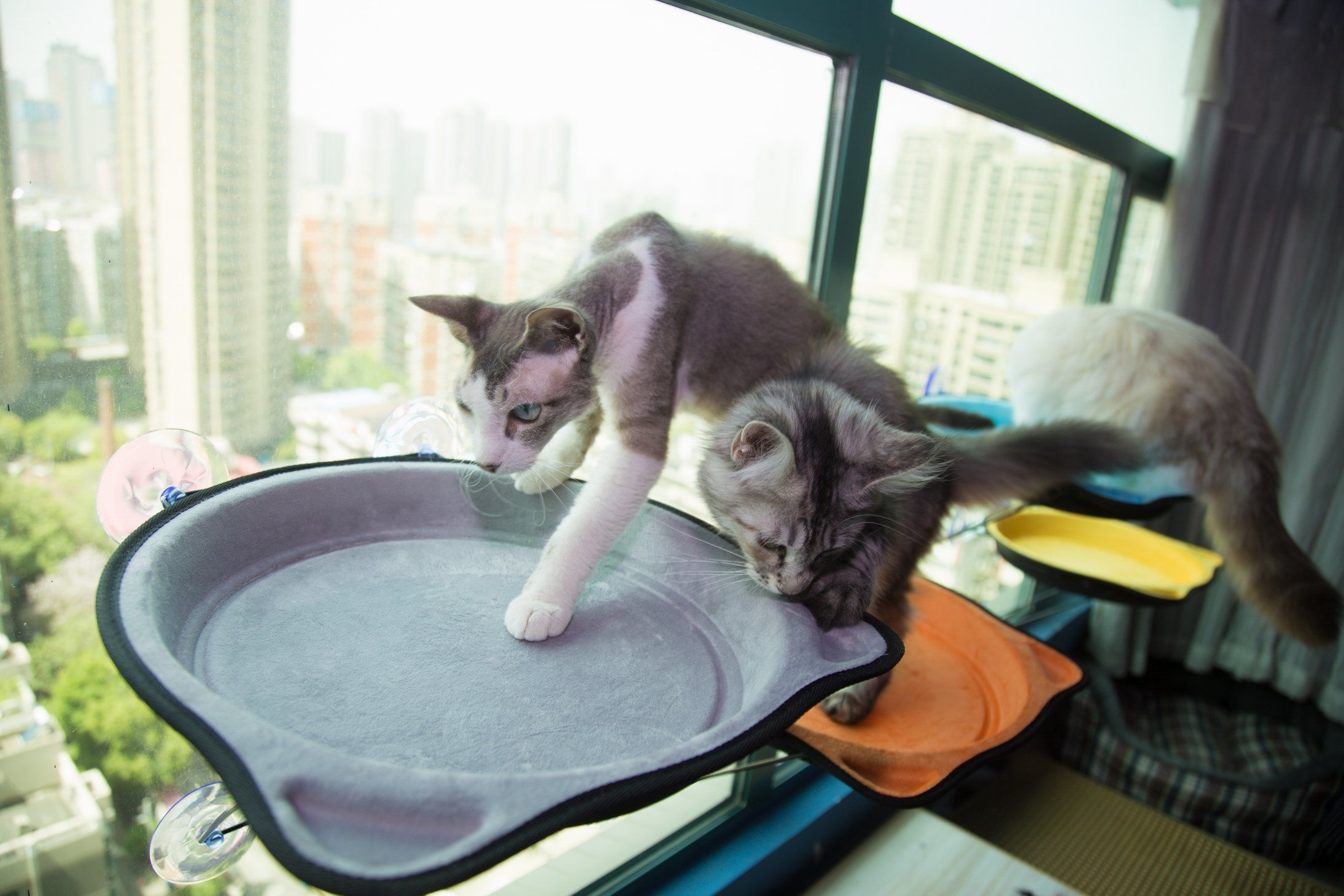 Cat Bed Window Seat Perch Sun Bed For Kitten Large Cat Puppy To 28 Lb With Suction Cups Grey Make Sure To Examine Out This Remarkable Pro