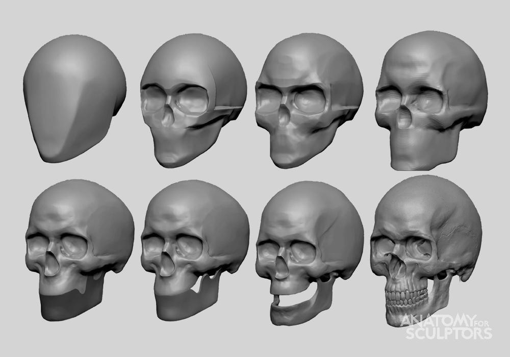 Anatomy For Sculptors - anatomy | Anatomy - Heads and Necks | Pinterest