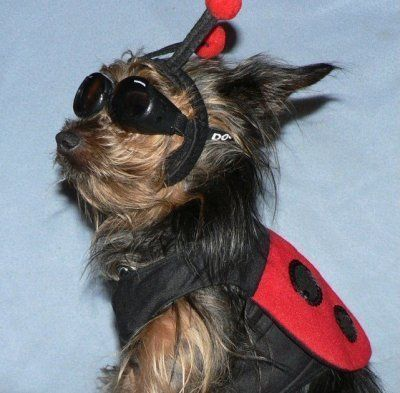 Costume 60 With Images Dog Halloween Dog Halloween Costumes Animal Halloween Costumes