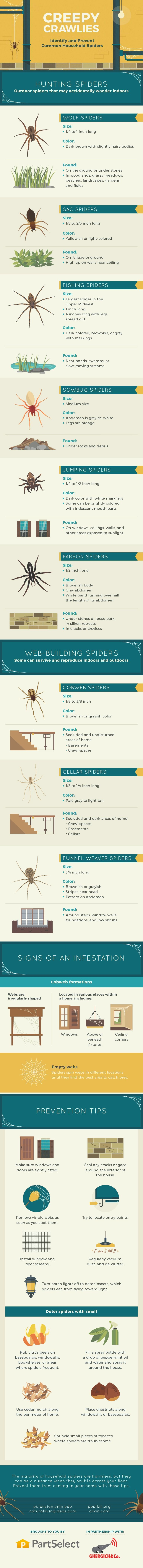 Creepy Crawlies: Common Household Spiders and Prevention Tips #Infographic