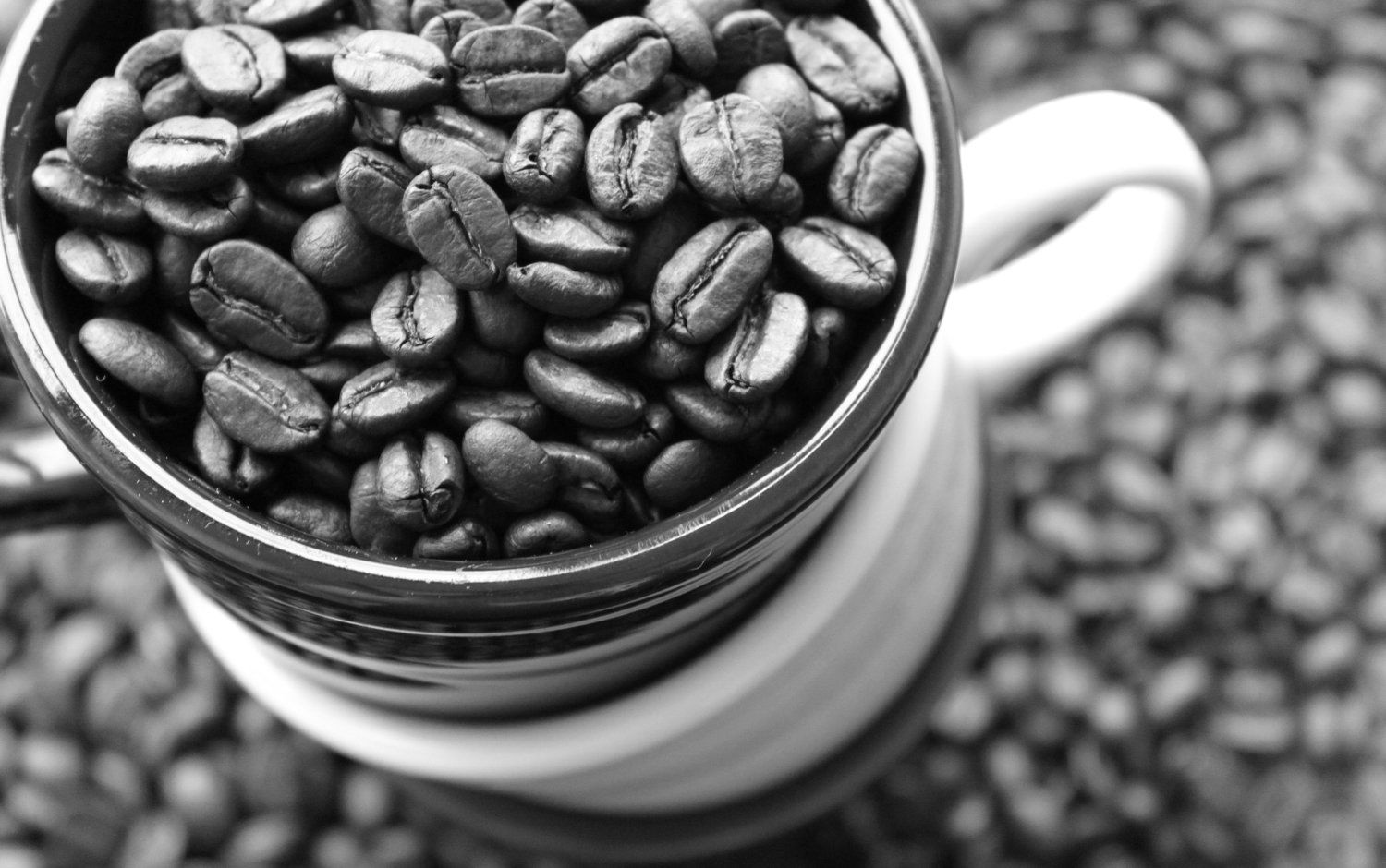 black and white coffee photography coffee beans photo 5x7 fine art