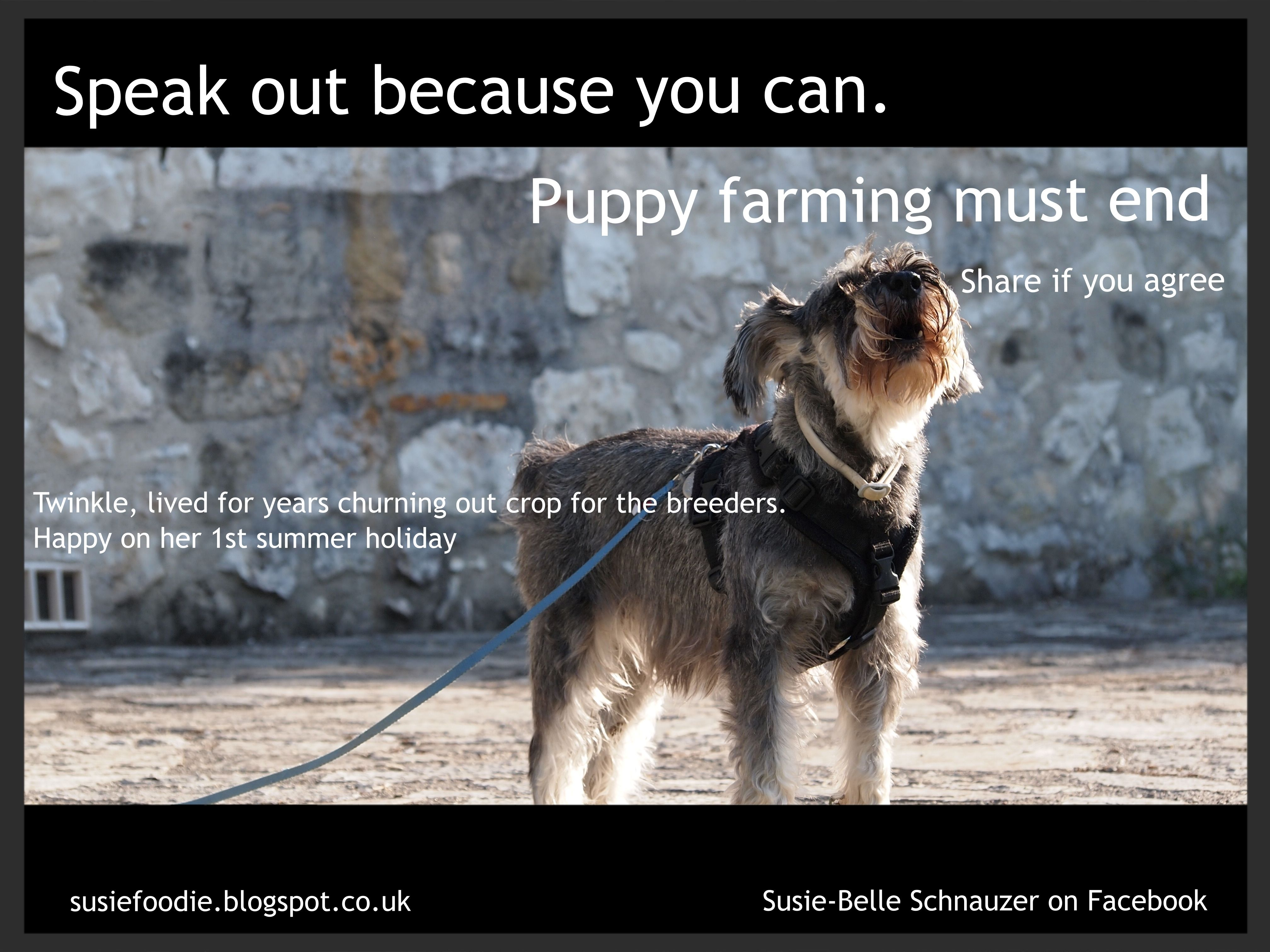 Twinkle Berry Lived For A Number Of Years In A Puppy Farm Breeding