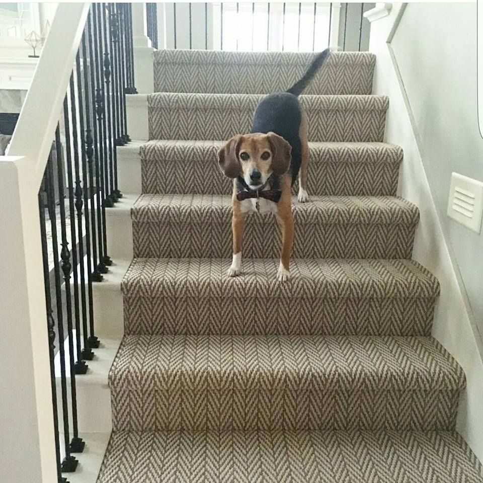 Best Tuftex Herringbone Carpet Makes Stairs Safe For Doggies 400 x 300