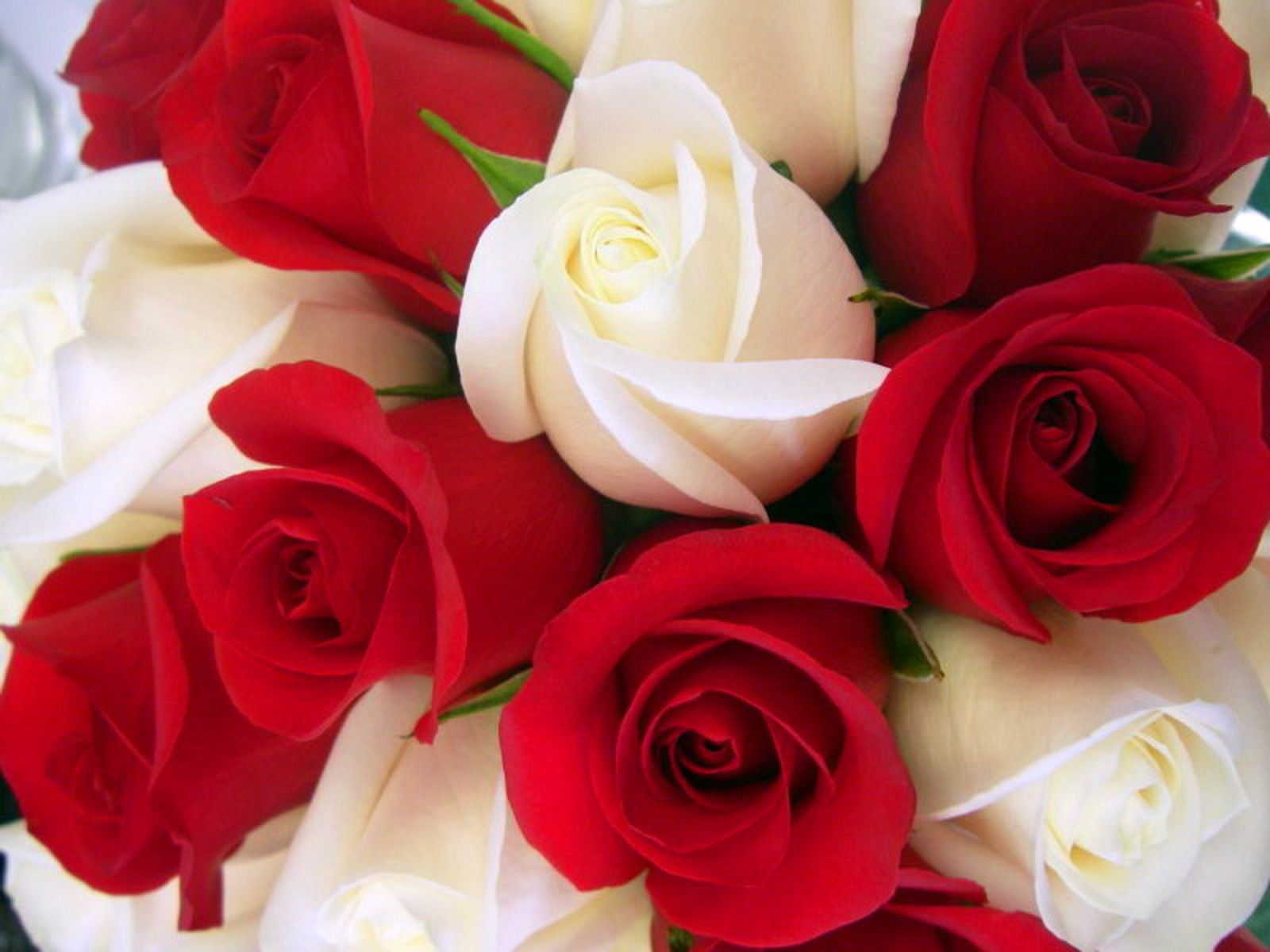Wallpaper rose wallpapers for free download about