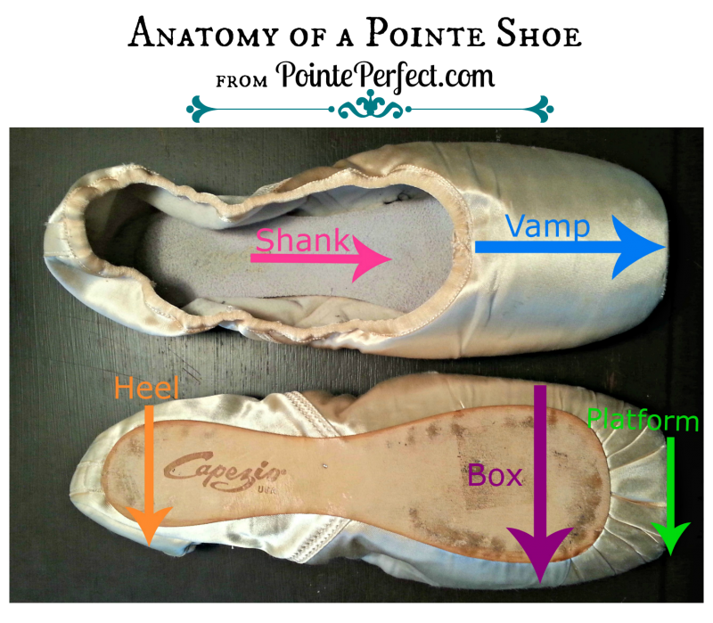 anatomy of a pointe shoe