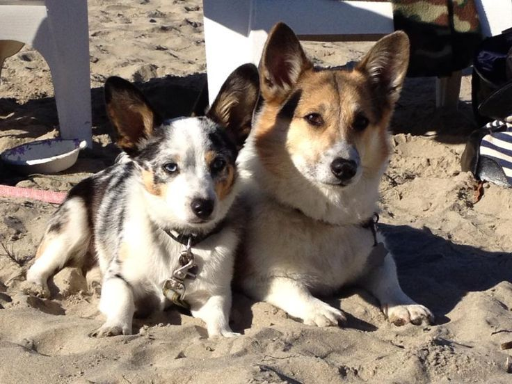 Frank and osa from cannon beach oregon