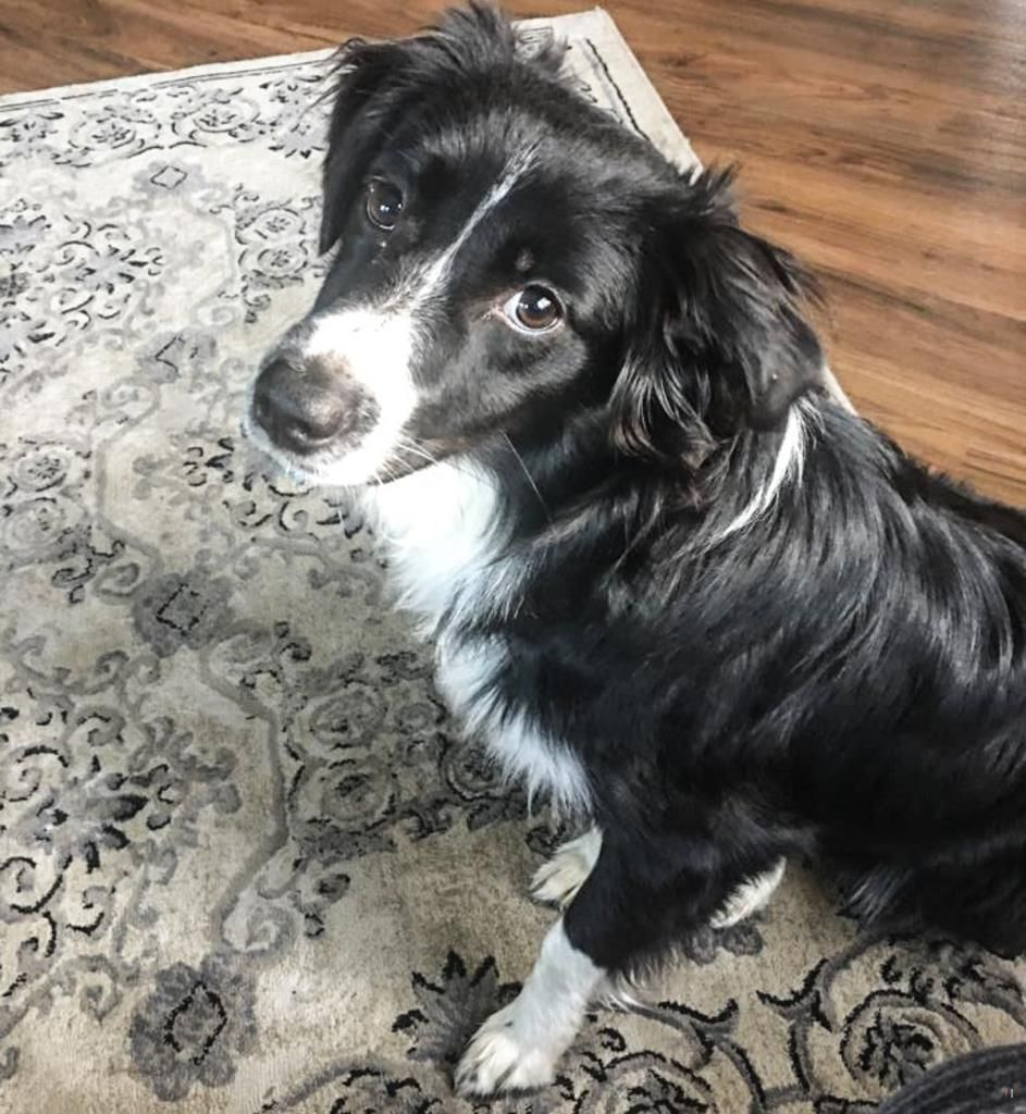 Lost Dog Female University Heights, OH, USA 44118