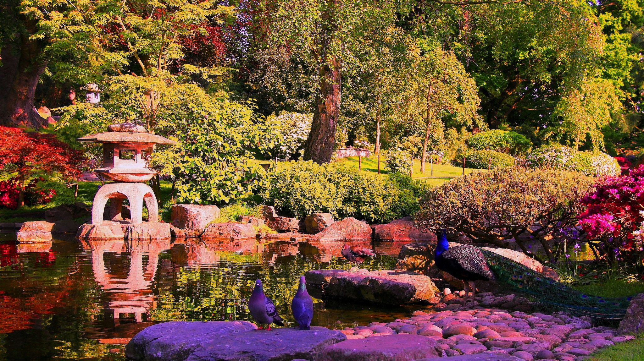 https://flic.kr/p/oamCKY | Kyoto Garden - Holland Park | Holland ...