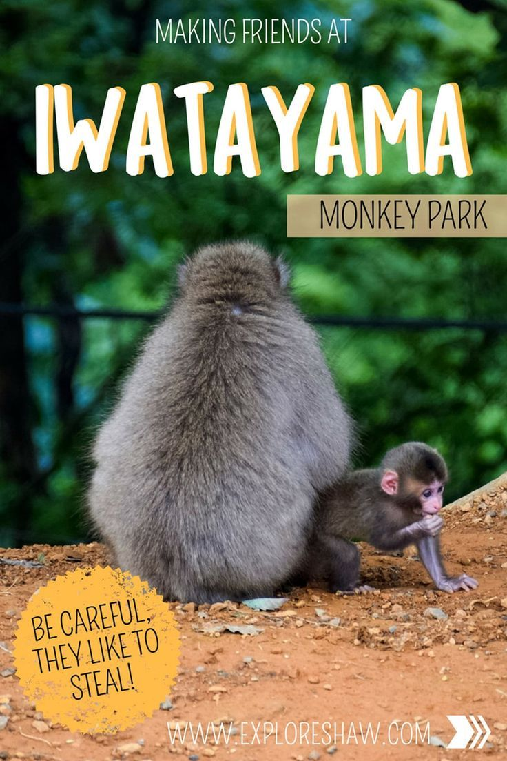 Hidden at the top of Mount Arashiyama is a crazy little place called Iwatayama. A monkey park at the top of the mountain, with beautiful views over Kyoto and monkeys roaming freely around the mountain top.  #Japan #Arashiyama #Kyoto via @exploreshaw