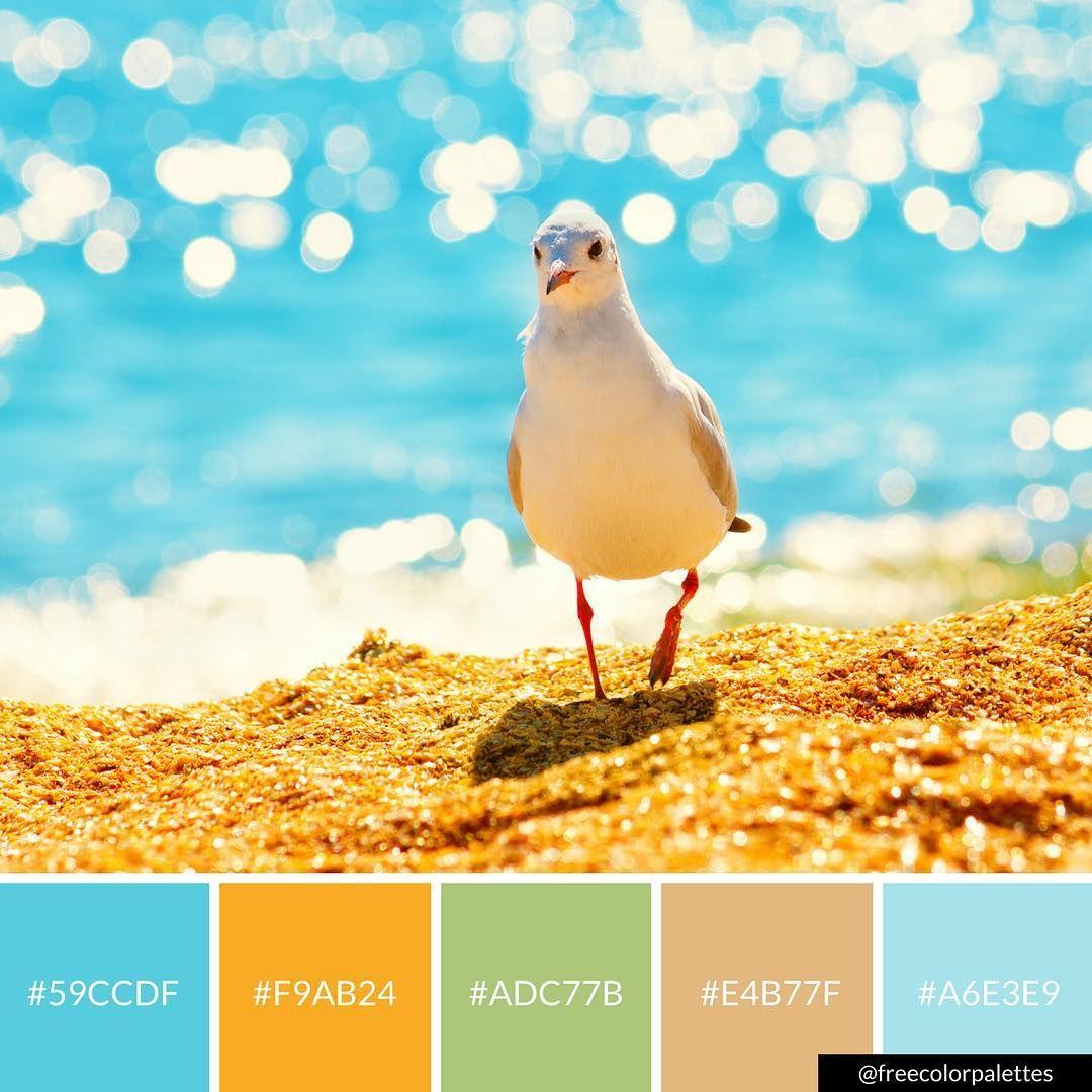 Beach Seagulls Summer Color Palette Inspiration
