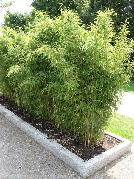 bambus – das faszinierende riesengras | un, und and auf, Garten und erstellen