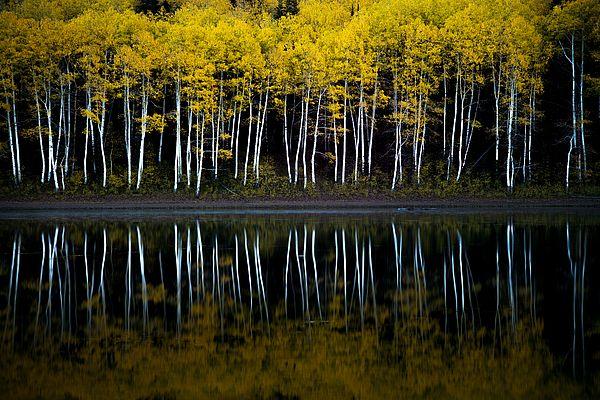 Autumn Mirror - photograph by Dustin LeFevre fineartamerica.com #aspentrees #autumnphotography #wallart